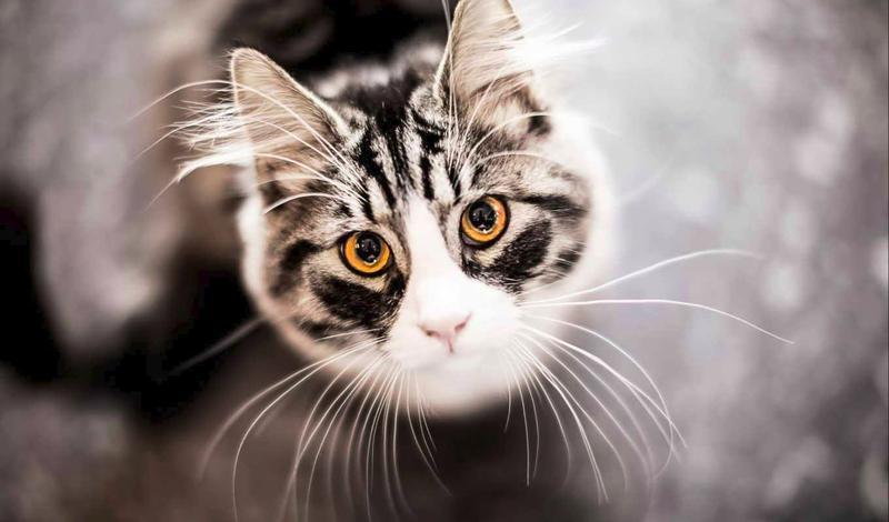 Усы помогают кошке определить, пролезет ли она в отверстие или нет.